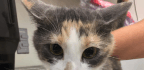 USDA Terminates Deadly Cat Experiments, Plans To Adopt Out Remaining Animals
