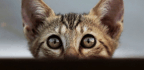 Cats Don't Fetch, But Know Their Names As Well As Dogs, Researchers Say