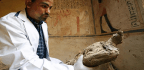 Mummified Mice And Falcons Found In Newly Unveiled Egyptian Tomb