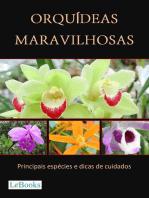 Orquídeas maravilhosas