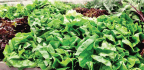 Vegetable Production in the US