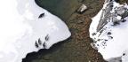 Elusive Seal Posse Colonized An Alaskan Lake