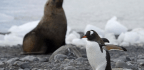 Penguins and Seals Create Invertebrate Hotspots On Antarctica...With Poop