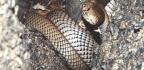 Snake Sense