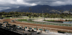 Sen. Dianne Feinstein Renews Call For Suspension Of Santa Anita Races