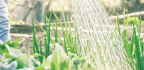 Top Tips for SUMMER WATERING