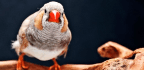 Like Us, Birds Are Particularly Good At Sorting Warm Colors