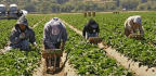 It's National Heat Awareness Day—Let's Protect Farmworkers from Extreme Heat