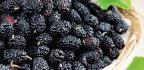 Round The Mulberry Bush