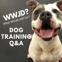 Dog Training Q&A What Would Jeff Do?