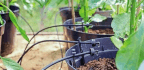 Anatomy Of An Automated Watering System
