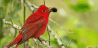 Managed Fires Create Haven For Midwest Birds