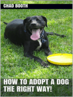How to Adopt a Dog the Right Way!