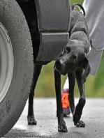 How Nosework Benefits the Reactive Dog