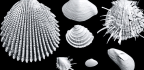 3D Imaging Reveals Hidden History In Old Shells