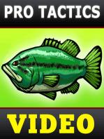 Fall Bass Fishing Tactics