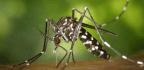 Bangladeshis Use Social Media To Tackle A Dengue Outbreak