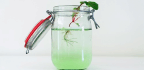 How Plants Hit The Brakes To Stop Root Growth