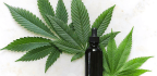 CBD-infused Products For Cannabidiol Newbies