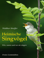 Heimische Singvögel: Wie, wann und wo sie singen