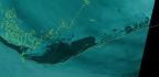 Satellite Imagery Shows Extent Of Devastating Flooding On Grand Bahama Island