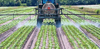 Prenatal Exposure To These Pesticides May Change Teen Brain