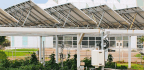 Farming Under Solar Panels Saves Water And Creates Energy