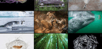 The Best Wildlife Photos Of The Year Remind Us That Nature Is Amazing—and Brutal