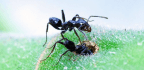 These Ants Keep Cleaner Nurseries Than We Do