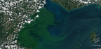 Giving Legal Rights To Nature Could Reduce Public Health Threats Like Toxic Algae