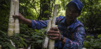 A Day In The Life Of A Bamboo Shoot Harvester In Myanmar