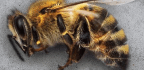 Vanishing Bees Should Not Be the New Normal