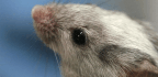 By Phasing Out Animal Testing, the EPA Could Turn You into the Guinea Pig