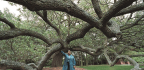 For 156 Years, A Mighty Oak In Virginia Has Stood As A Symbol Of Freedom Across The Nation