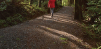 How Forest Bathing Helps You Feel Better