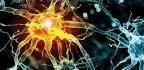 ¿qué Son Las Neurociencias? El Futuro De Nuestro Cerebro, Al Descubierto