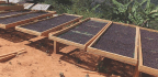 Natural Processed Coffees Dominate Cup Of Excellence Mexico And Burundi