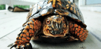 Turtle Spine Signals Reveal How Movement Starts