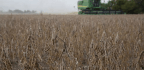 Historic Rains Ravaged Illinois Farms During Planting Season. Now The Race Is On To Harvest Corn And Soybeans Before It's Too Late.