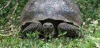 'On The Backs Of Tortoises' Challenges Us To Consider How Much Of Life Is Intertwined