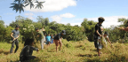 Will Collective Farming By Artists Save One Of Manila's Remaining Urban Fields?