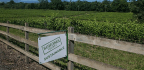 Wine Moguls Destroy Land And Pay Small Fines As Cost Of Business, Say Activists