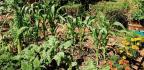 Healthy Soils, Healthy Plants, Healthy People
