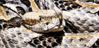 Where Do Rattlesnakes Hide Out In The Winter?