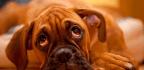 New Legislation Makes Animal Abuse A Felony