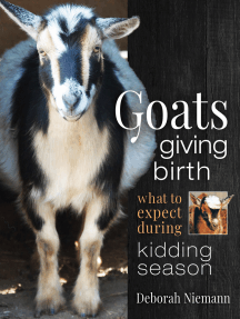 Goats Giving Birth: What to Expect during Kidding Season