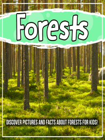 Forests: Discover Pictures and Facts About Forests For Kids!