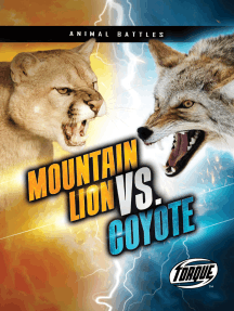 Mountain Lion vs. Coyote