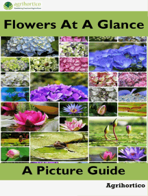 Flowers at a Glance: A Picture Guide